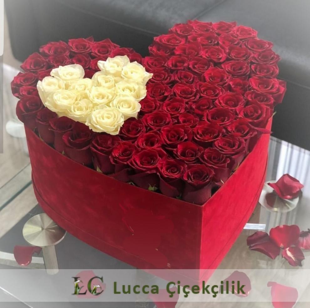 LUCCA KUTUDA GÜLLER